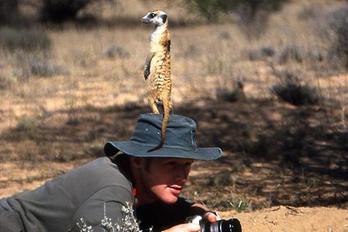 matt & meerkat 2-500